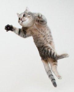 причины цистита у кошек
