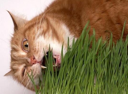 симптомы авитоминоза у кошек