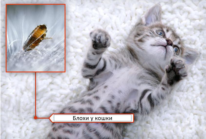 причины авитоминоза у кошек