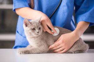 лечение бронхита у кошек