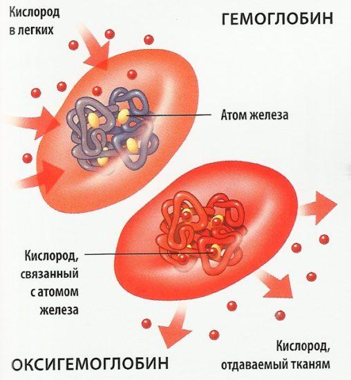 гемоглобин в крови функции