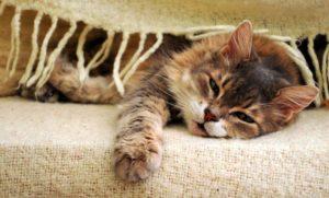 заболевание желудка у кошки