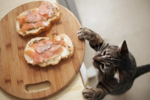 признаки и симптомы гастрита у кошки