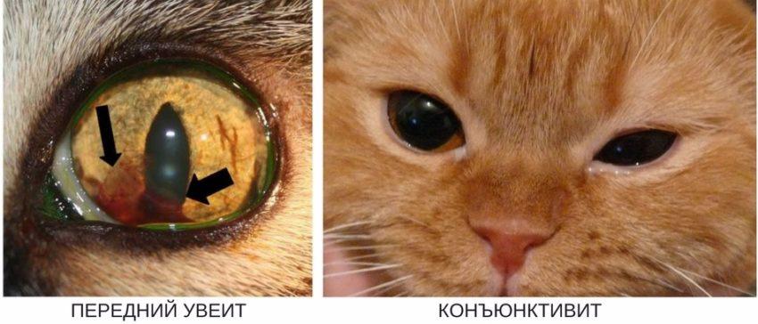 причины глаукомы у ккошек