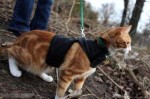 профилактика ожирения у кошек