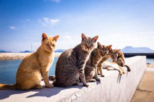причины авитаминоза у кошек