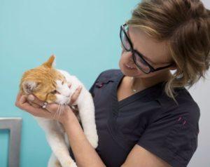 прогноз при глаукоме у кошки