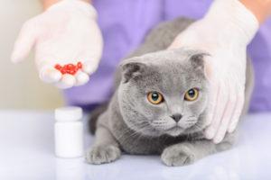 чем и как лечить анемию