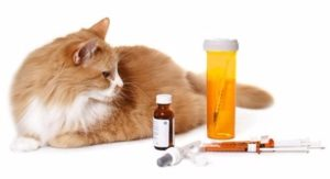 консервативное лечение эндометрита у кошек