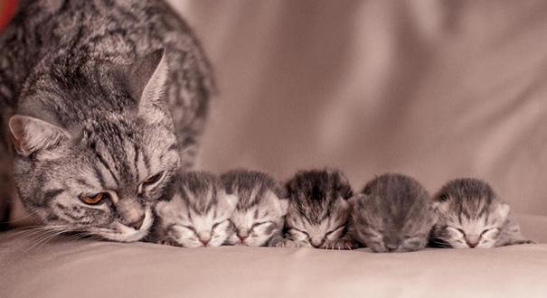 причины выпадения матки у кошки