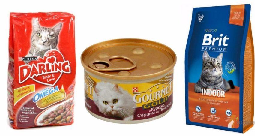профилактика и лечение анемии у кошек