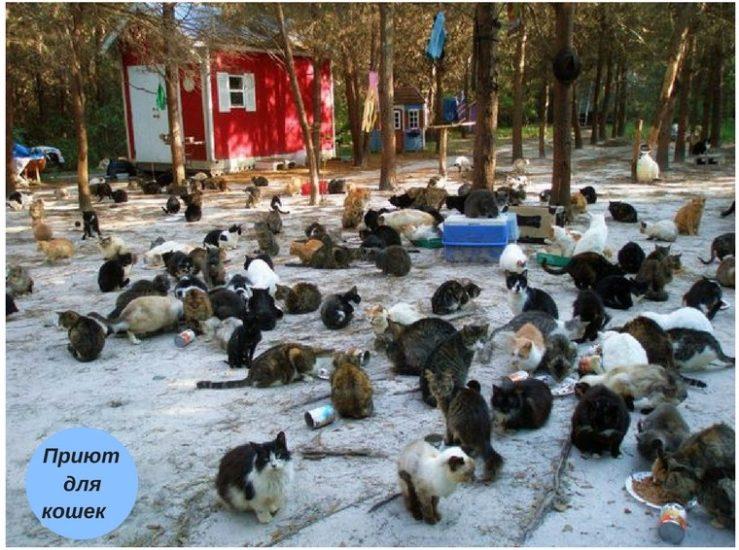 скученность кошек как причина перитонита