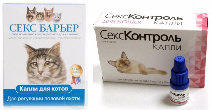 препараты, провоцирующие мастит у кошек