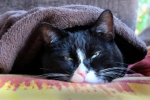 симптомы гастрита у кошек