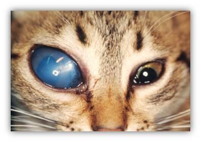 виды глауком