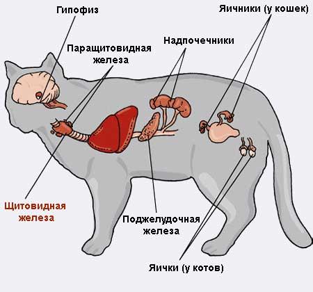 причины ожирения у кошек