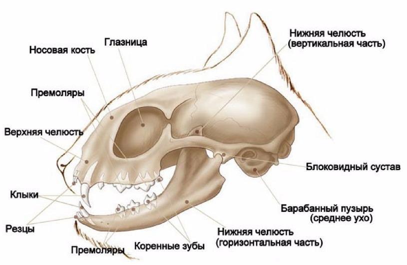 виды переломов нижней челюсти