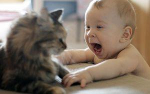 причины вывиха у кошки