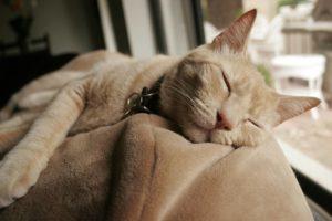 покой для кошки после сотрясения мозга