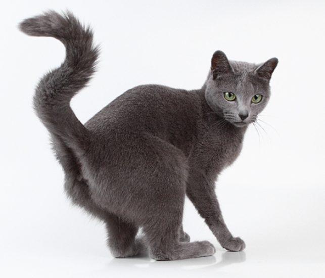 зачем коту нужны параональные железы