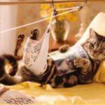 рана у кота
