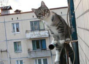 причины сотрясения мозга у кошек
