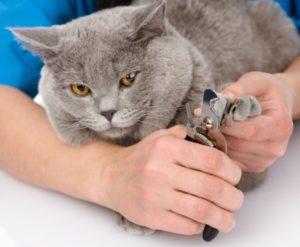 профилактика вросшего ногтя у кошки