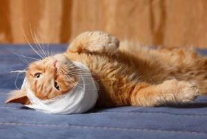 лечение гематомы у кошки