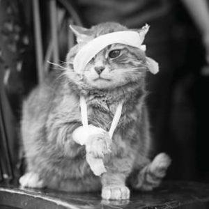 симптомы сотрясения мозга у кошек