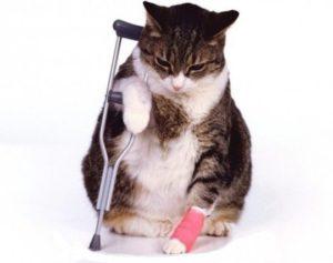 симптомы и лечение вывиха у кошки