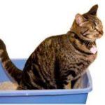 проблемы с кишечником у кошки