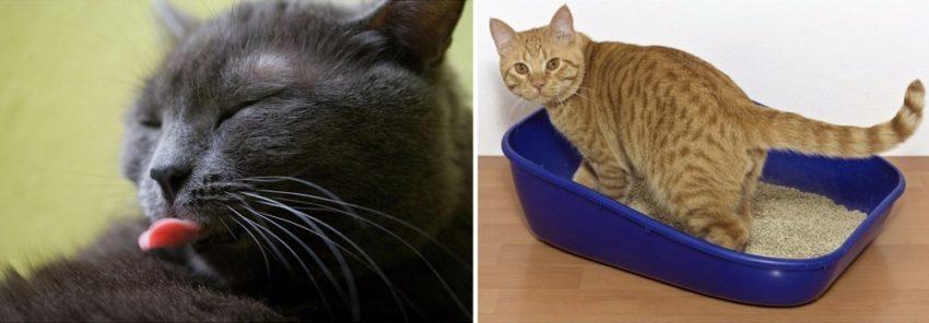 симптомы наличия инородного тела у кошки