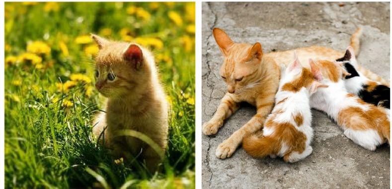 профилактика рахита у кошек