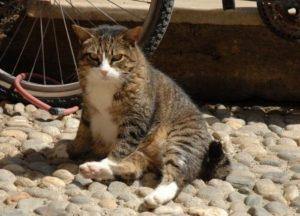 солнечный удар у кошек