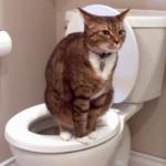 у кошки кал с кровью