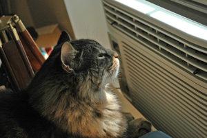 профилактика солнечных ударов