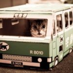 правила перевозки кошек