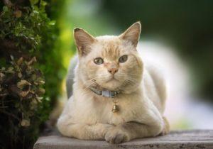 профилактика заражения кошки токсоплазмозом