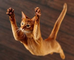 причины перелома таза у кошек