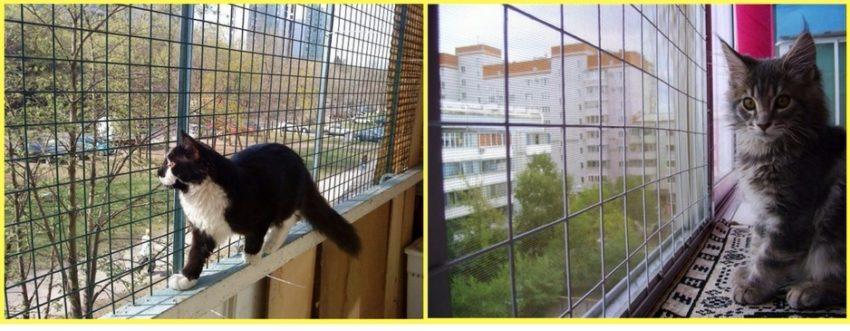 профилактика переломов у кошки