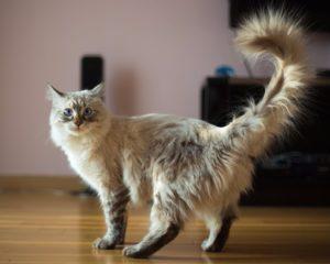 признаки слепой кошки