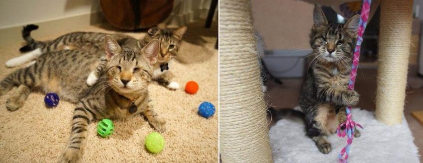 причины слепоты у котят