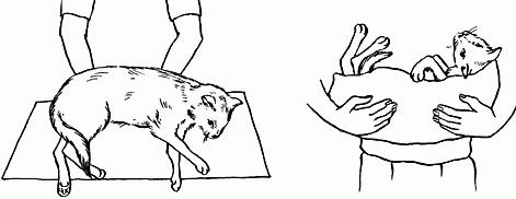 оказание первой помощи кошке
