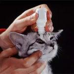 конъюнктивит у кошек и собак