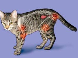 причины и симптомы артрита у кошек