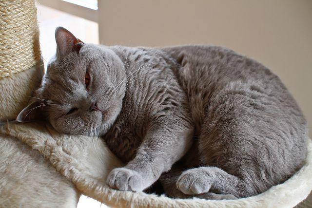 причины и симптомы ВИЧ у кошек