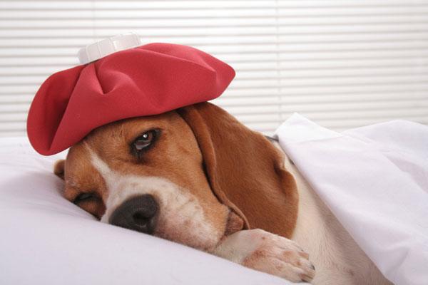 причины и симптомы пневмонии у собак
