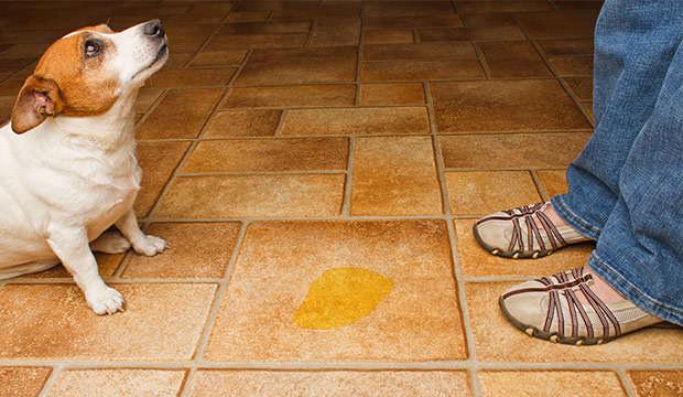 причины и симптомы цистита у собак
