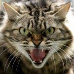 лечение нервных болезней у кошки