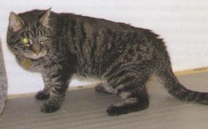 симптомы остеартрита у кошек